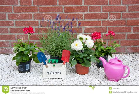 types of garden plants and flowers summer garden plants and flowers stock photo image 21511410