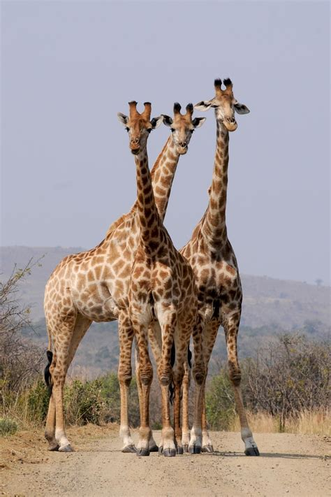 pattern formation in animals is based on free pattern formation wild animals south africa 41109