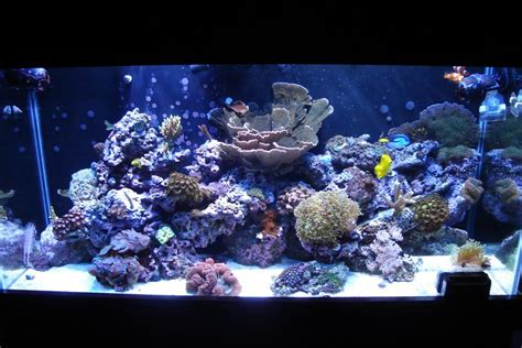 Reef Aquascaping Ideas by Aquascape Ideas Reef Bruin