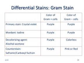 gram stain colors microscopy for microbiology a primer