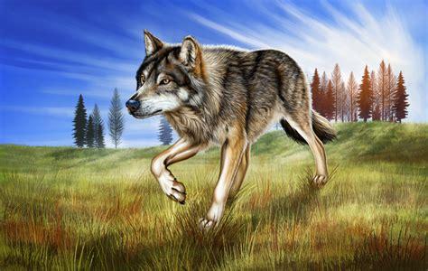 Lone Wolf lone wolf wallpaper