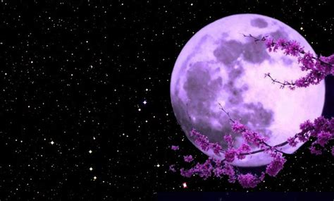 pink moon april april s pink moon poem by emile pinet