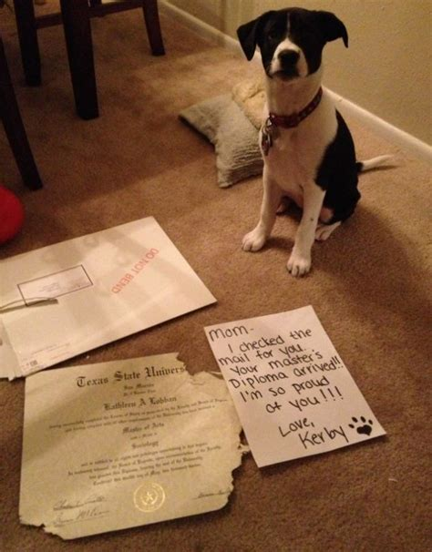 Dog Shaming Meme - dog shaming craze is cruel say vets daily mail online