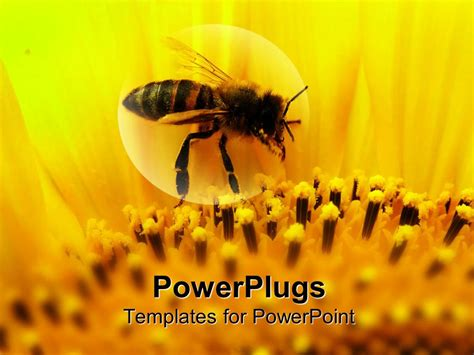 Powerpoint Template Honeybee Sitting On A Sunflower Zoomed In 16507 Bee Powerpoint Template