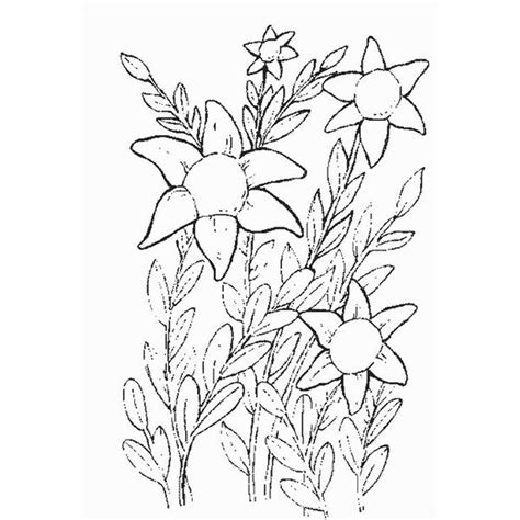 coloring pages of real flowers springtime spotlight five free with flower coloring