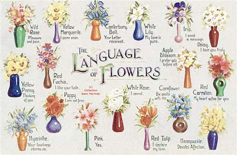 say it with tussie mussies the victorian language of flowers freddie s flowers blog
