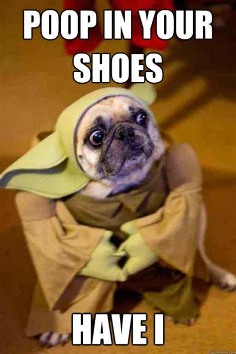 pug jokes pictures 25 best images about pugs are on picture quotes blame and pug