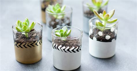 mini succulent planters 8 fresh ways to decorate with succulents porch advice