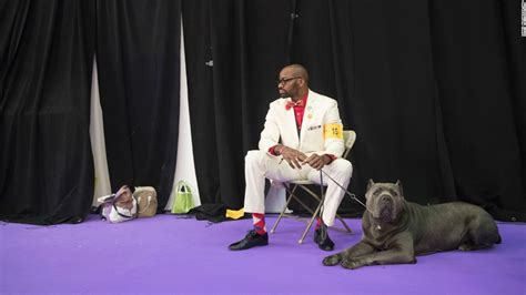 westminster show tickets westminster kennel club show tickets the best of 2017
