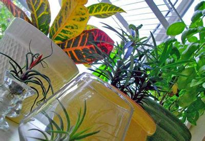 care  indoor plants planet natural