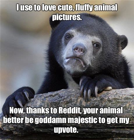 Cute Animals Memes - cute animal love memes image memes at relatably com