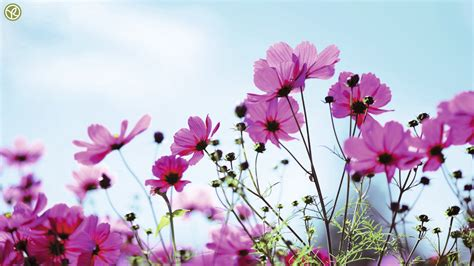 imagenes de flores wallpaper hd wallpapers hd primavera y flores parte 15 im 225 genes