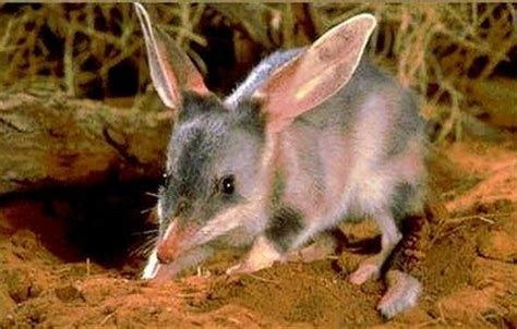 8 Animals From Australia Id To See by Australian Desert Animals Wildlife In The Outback