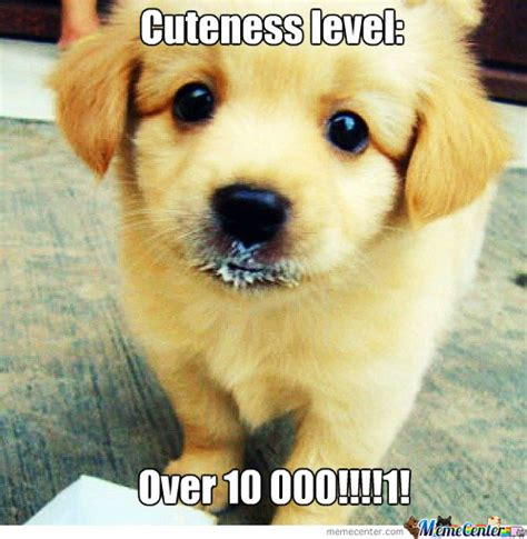 Cute Overload Meme - cuteness overload by 96bad end night meme center