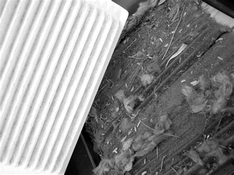 Cabin Filter Vs Air Filter by Water Replacement Auto Repair 85016 Anthony