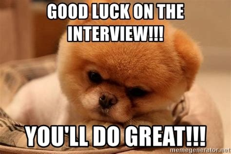 Good Luck Interview Meme - good luck on the interview you ll do great boo dog
