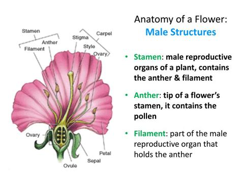 which body section contains the reproductive structures on a beetle ppt flower structure powerpoint presentation id 1939463