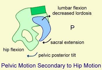 Ktm Hutt Usa Pelvic Motion