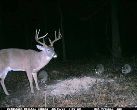 Alabama Records Big Whitetail Bucks Memes