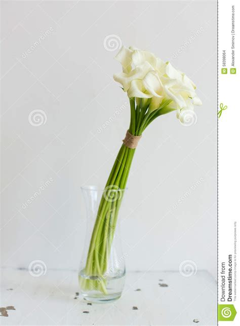 calle in vaso mazzo di calle nel vaso fotografia stock immagine 58398064