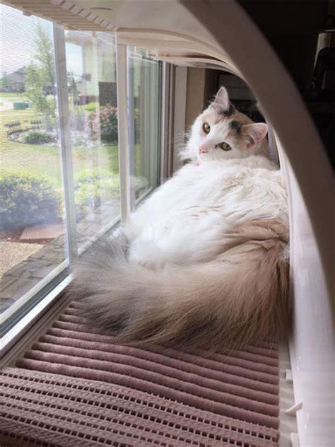cat window bench throw that old cat window seat away modern cat