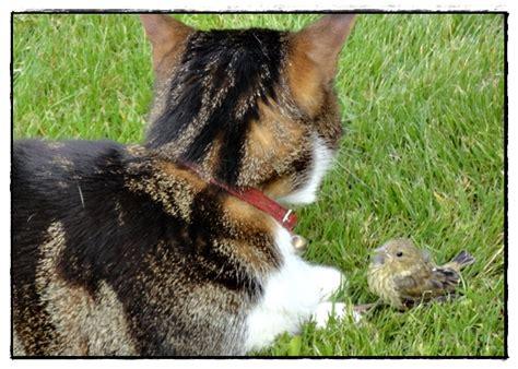 et la porte secr礙te en entier et en fran礑ais le chat et l oiseau 9 juin 2012 la guillaumette