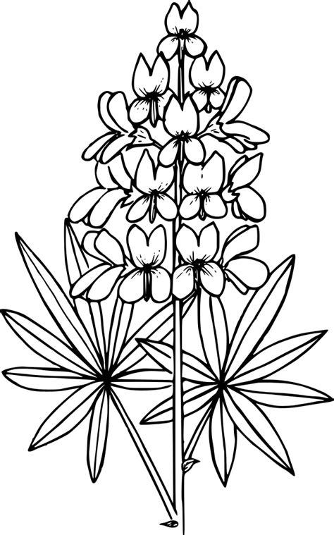 OnlineLabels Clip Art - Prairie Lupine