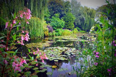 fairy tale pond  water lilies  willow trees