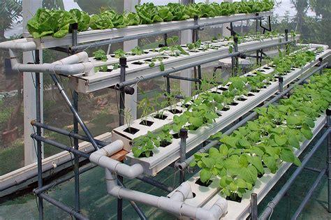 benefits  hydroponic indoor gardening greenhouse growers