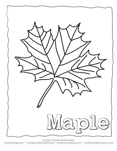 coloring page of a maple leaf blank leaf template coloring home