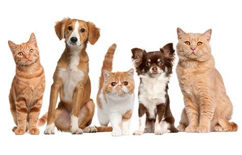 My Pet pet product reviews tips my pet needs that