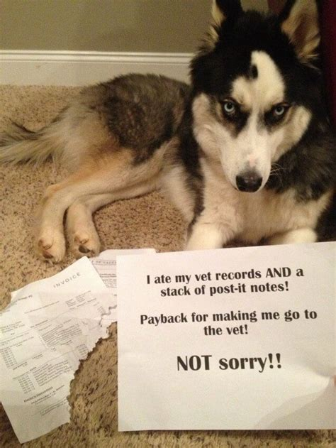 Dog Shaming Meme - 11 best godfather baby memes images on pinterest ha ha