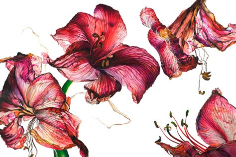 libro rosie sanders flowers a it s nice that contemporary botanical painting in rosie