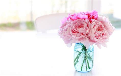 peonies in vase white peonies vase wallpaper