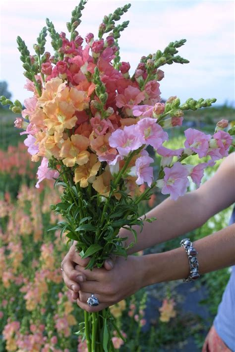 25  best ideas about July Flowers on Pinterest   June