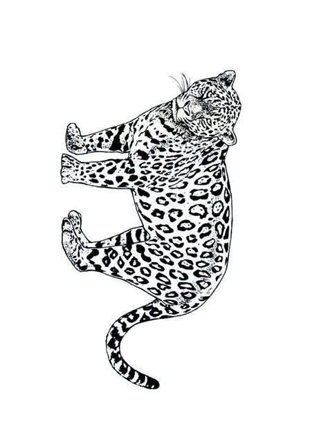 imagenes de jaguares para dibujar 205 ndice de dibujos otros felinos