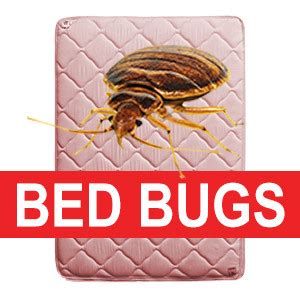 recycle bed bug infested mattress mattress recycling
