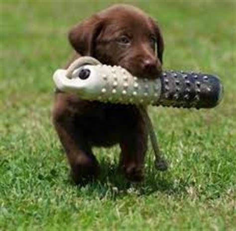 puppy s at home tips puppy tips