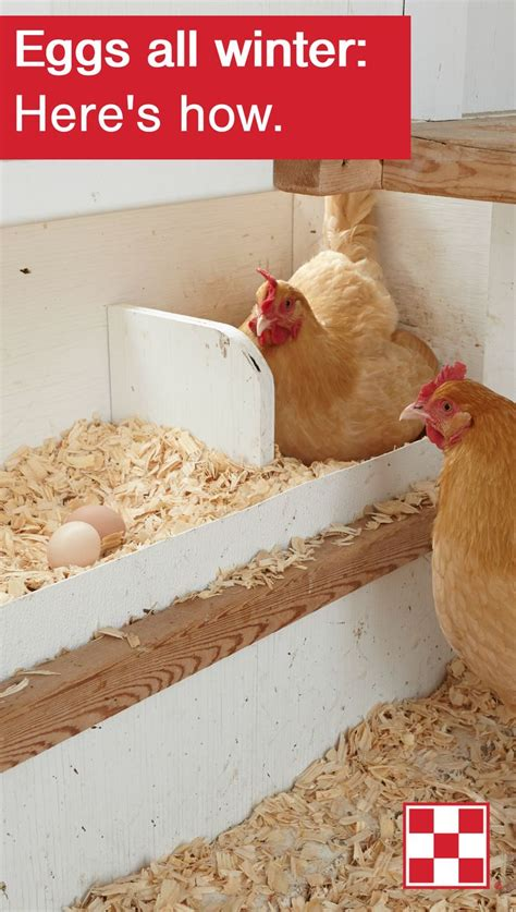 backyard poultry naturally 103 best tips from our flock images on pinterest