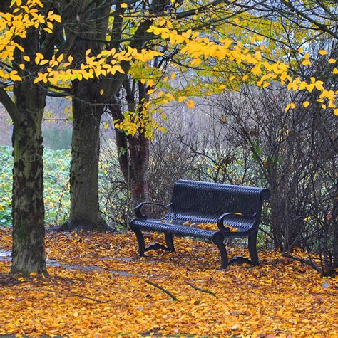 fall bench fall bench photograph by kirt tisdale