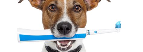 anesthesia free teeth cleaning pet junction grooming pet supplies your pet s other best friend