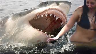 shark attacks caught on tape youtube