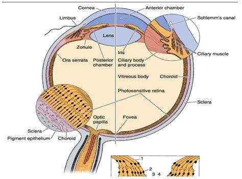 Limbus Eye Nivoteamfo