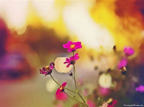 Flower Background For Presentation Powerpoint Themes Flower Background For Powerpoint Flower Background For