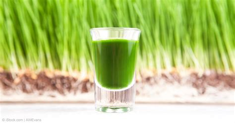 Juicer Wheatgrass the potential health benefits of wheatgrass