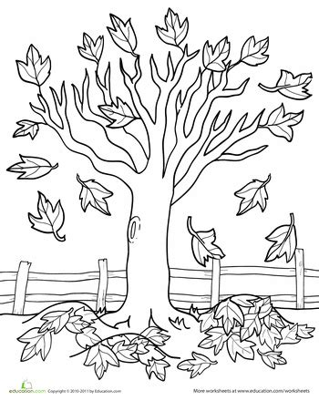 autumn coloring pages for kindergarten maple tree coloring page