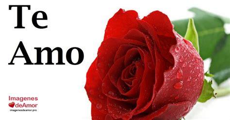 imagenes de hola con rosas 14 imagenes de hermosas rosas con frase te amo