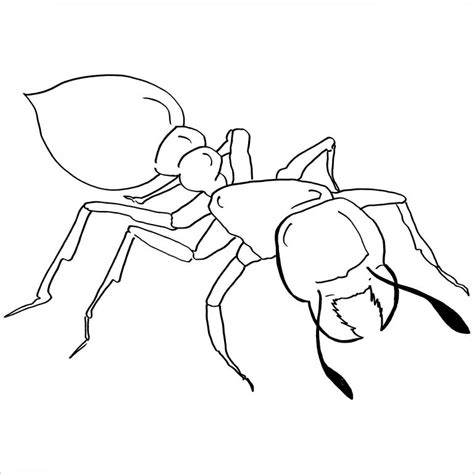 ant coloring page ant coloring pages coloringbay