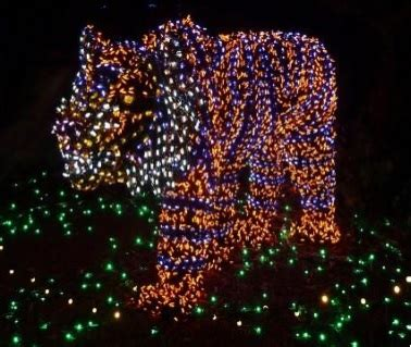 houston zoo lights coupon top events to do around houston