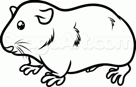 Guinea Pig Coloring Pages Fascinating Guinea Pigs Outline Colouring Pages
